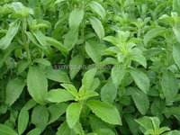 Natural stevia powder as sweetener with stevioside 90% & Rebaudioside A 40%-90%