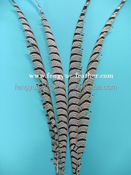 BY-B03 Zebra Tail Carnival Costumes Lady Amherst Dyed Centra Tail Autumn Fire Feather