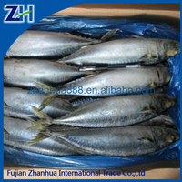 frozen pacific mackerel saba fish high quality from China