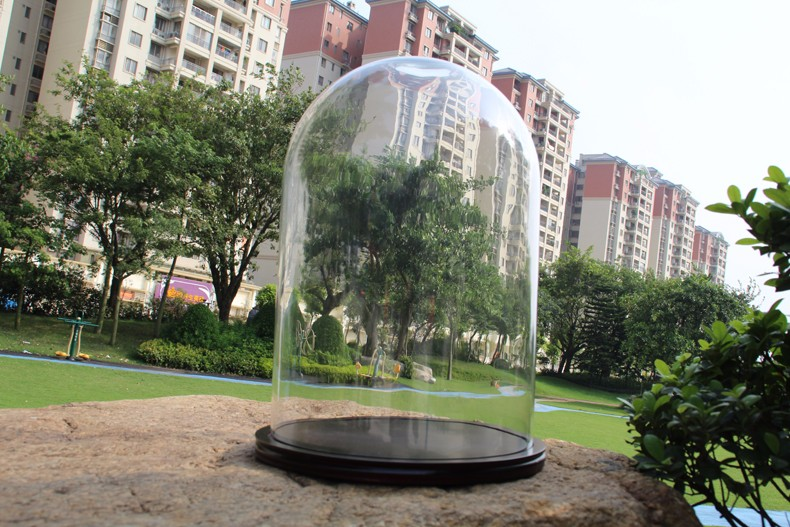 30x43cm glass dome wooden base jewelry glass dome for camera