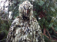 001 Strap Ghillie Suit TuYe Polyester Mesh Wholesale Outdoor Hunting CS Game Camouflage Woodland Digital Ghillie Suit