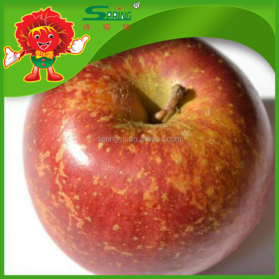 red honey apple pearl nutricious apple cheap apple fruit price