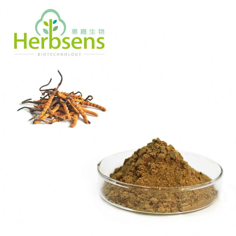 Organic Best Price cordyceps sinensis price For Nutritional Supplements