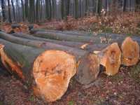 Mahogani, Padouk & Bubinga logs for sale, excellent price
