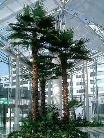 China supplies high quality best selling artificial outdoor palm tree for decoration with a reasonable price