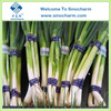 /product-detail/china-supplier-fresh-green-chinese-onion-60533139775.html