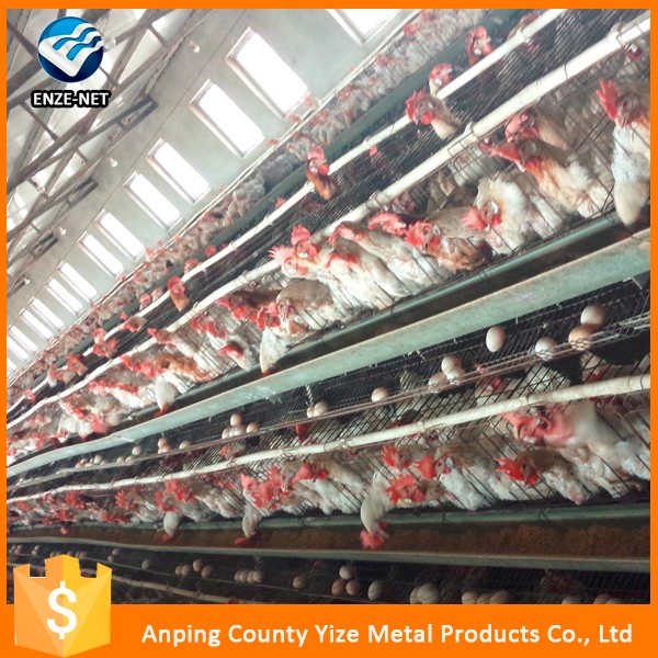 Agricultural equipment design layer chicken cages,bird laying hens cheap chicken coops, poultry chicken cage for sale(Factory)
