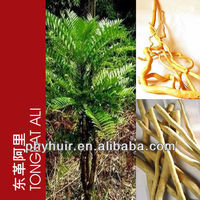 High quality tongkat ali herbs,tongkat ali herbs 200:1,tongkat ali seeds