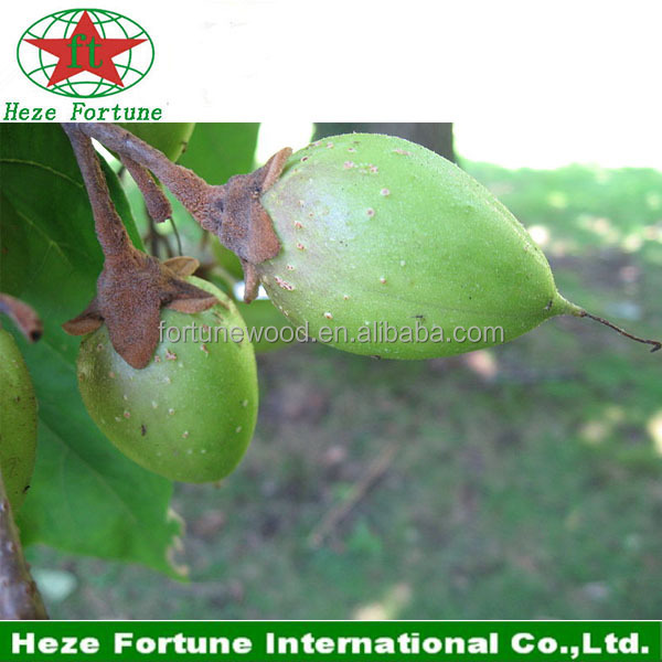 Ornamental Trees paulownia Fortunei seeds for germination