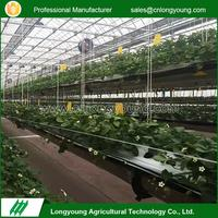 Latest Design Fruits Growing Agricultural Hydroponic