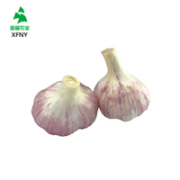 Cheapest Shandong fresh garlic 2016 normal white