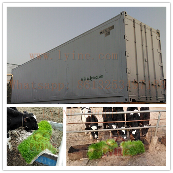 soilless culture system hydroponic trays animal fodder machine/ cattle feed planting container