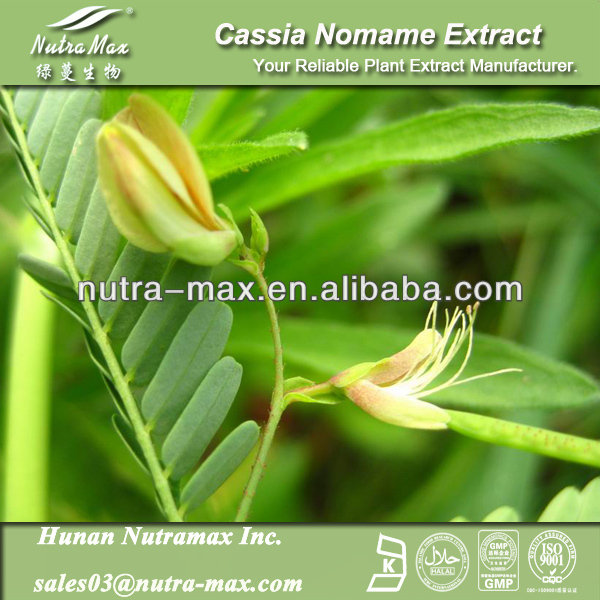 NutraMax Supply Nomame Semaherb P.E./Cassia Nomame Extract/Cassia Nomame P.E. 8%~20% Flavonols 10:1