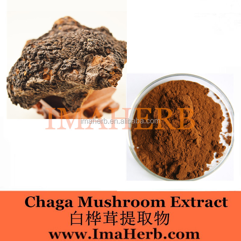 ISO Approved Competitive chaga mushroom dual extract