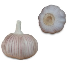 Fresh garlic manufacturer factory from China