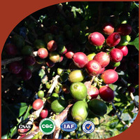 wholesale green arabica green bean coffee