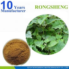 Natural Organic Nettle Leaf Extract With Competitive Price
