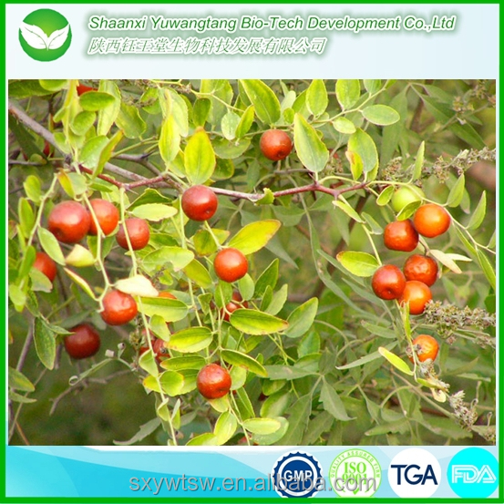 best quality jujube oil with competitive price