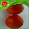 farm fresh tomatoes for sale pickled green red tomatoes