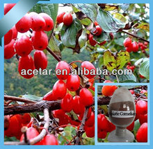 Asiatic Cornelian Cherry P.E.