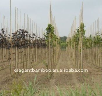 bamboo stake poles for orchard plant tree supporting