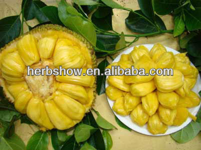 High Quality Jackfruit Seed For Growing