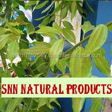 2014 Cajeput Bulk Essential Oil with Wholesale High Quality