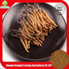 ISO Certified Chinese Caterpillar Fungus Mycelium/ Cordyceps Sinensis Extract Powder with 10g Free Sample
