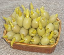 green olives stuffed with macedonian pepper