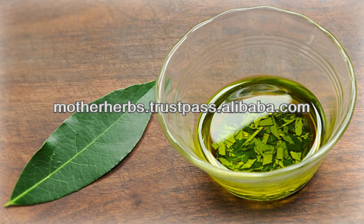 Wholesales of Bay Leaf Oil For Rheumatism
