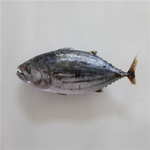 2017 New Arrival Good Price Frozen Skipjack Tuna in Tuna