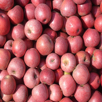 2016 new harvest red fresh qinguan apple in china
