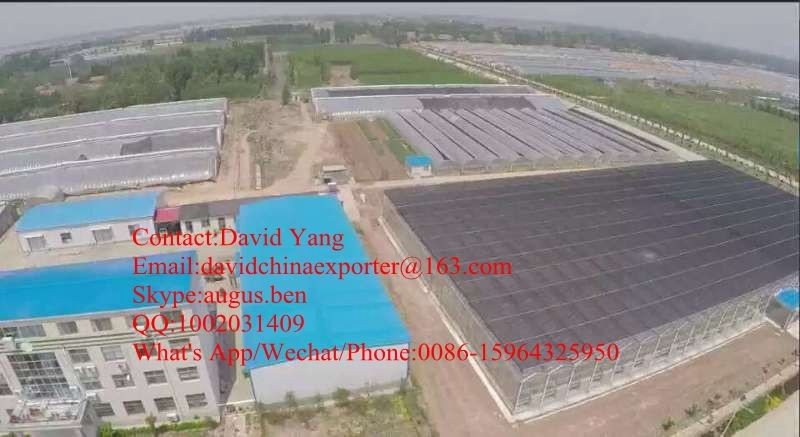 PC Sheet Cover Material and Solar Agricultural Greenhouses Type Polycarbonate sheet