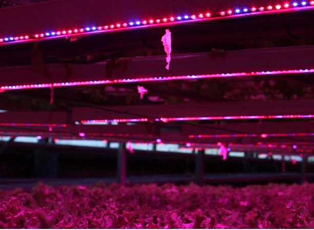 Greenhouse Grow Light Bar LED Water Proof Dusty Proof for Greenhouse Projects,Vegetables,Flowers and Indoor Plants