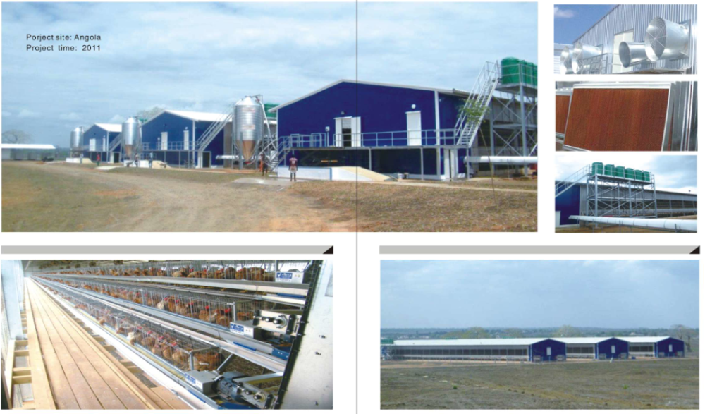 low cost poultry chicken fram steel structure hen building in qingdao