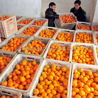 Fresh Fruits Oranges Mandarins Tangerines Best