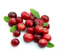 Cranberry Seed Oil Wholesale