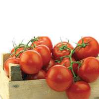 Top Quality Lycopene 5%, 10%, 20%, 70%,80%,90%