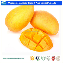High Quality Fresh Mango , Fresh Golden Yellow Mango , Fresh Mango Fruit with reasonable price !!