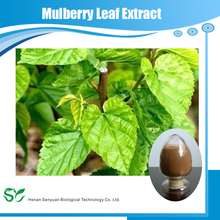 High quality white mulberry leaf extract