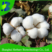 2016 new cotton seeds with big cotton boll and high yield