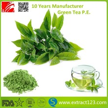 high quality green tea polyphenols extract powder