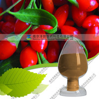 powder lycium barbarum polysaccharide 50% wolfberry goji berry extract