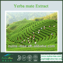 1kg Yerba mate Extract (100% Natural & GMO Free )