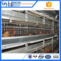 Layer egg chicken cage/poultry farm