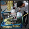 /product-detail/new-design-sugar-cane-juicer-machine-fresh-ginger-juice-machine-for-sale-60547295657.html
