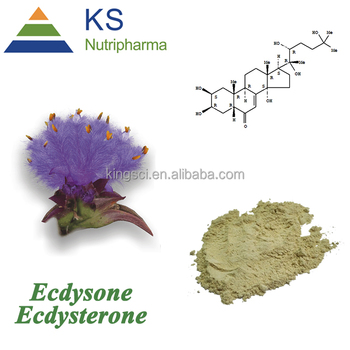 cGMP Manufacturer Food Grade Cyanotis Arachnoidea beta and 20 hydroxy Ecdysterone root Extract Powder KS-0211