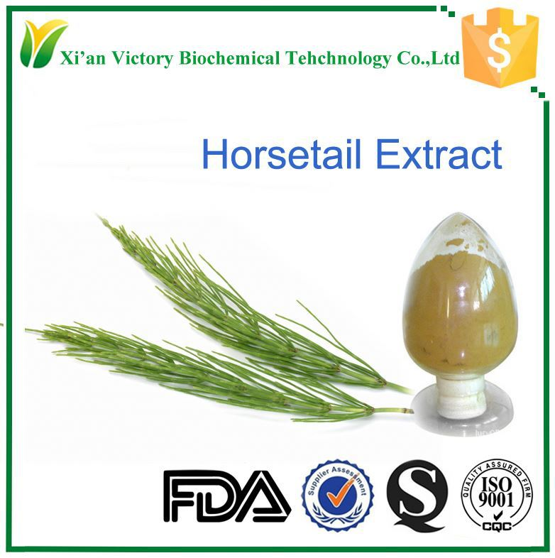 100% natural and high quality horsetail extract with 7% silica