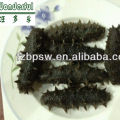 Best Price of High Quality Dried and Frozen Sea Cucumber Holothurian