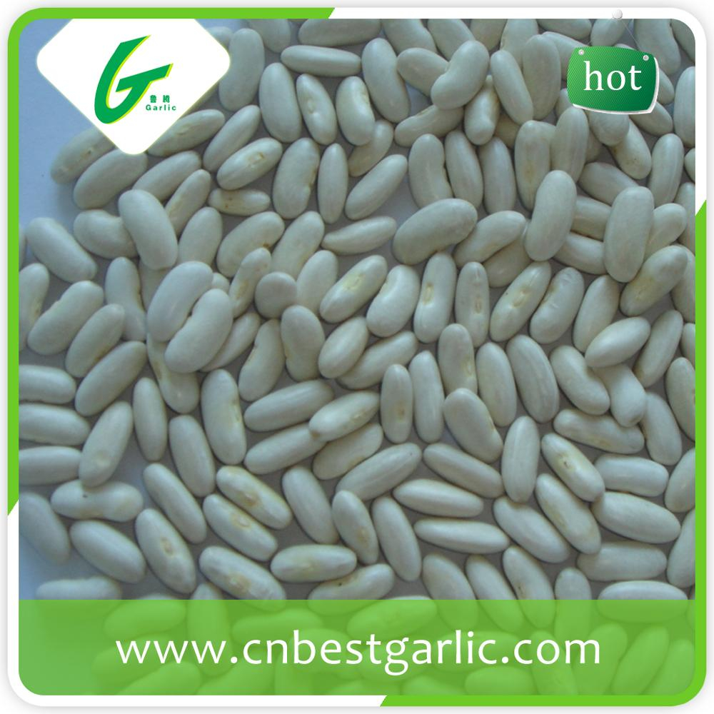 Medium bulk white kidney bean japanese type